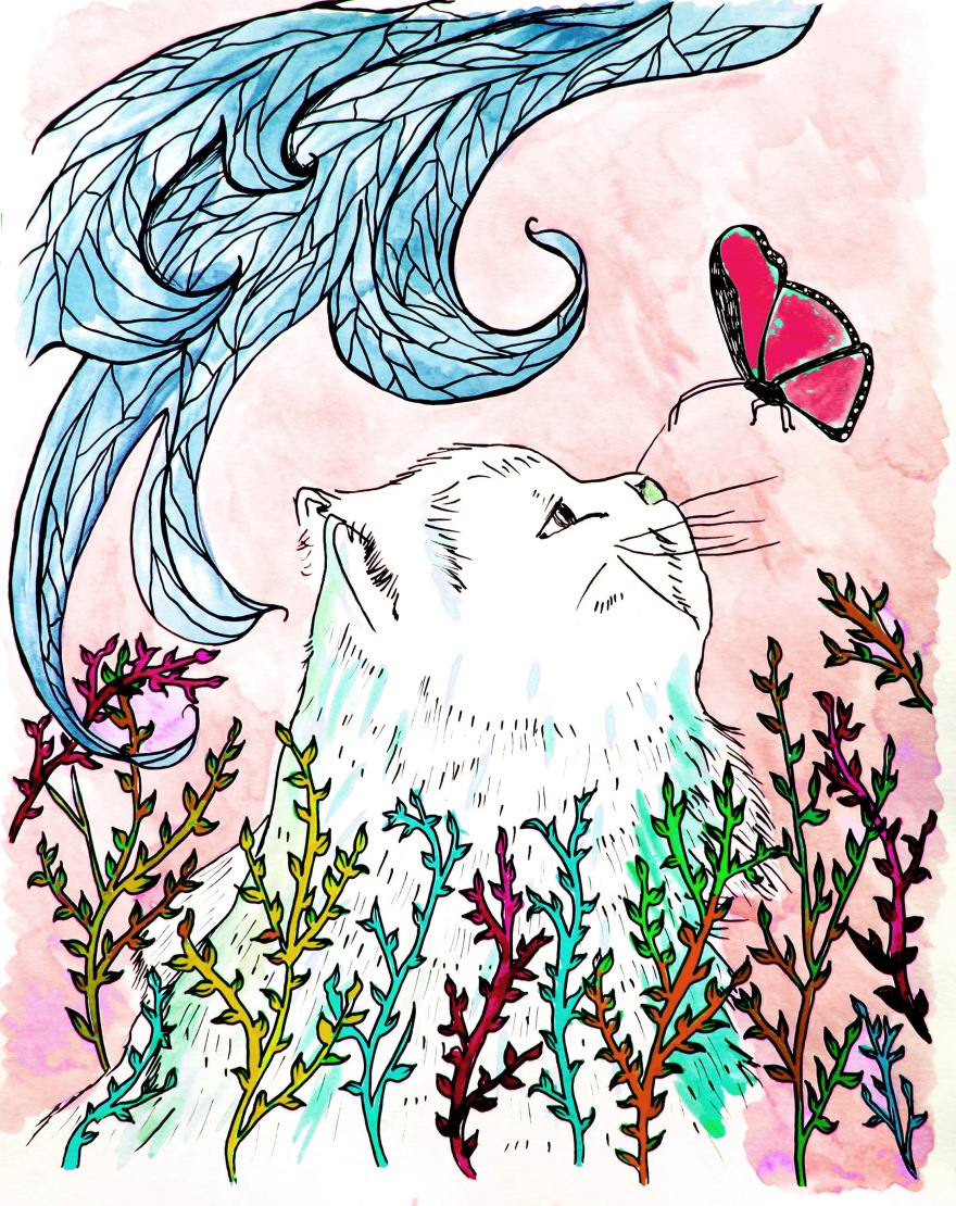 Cat butterfly