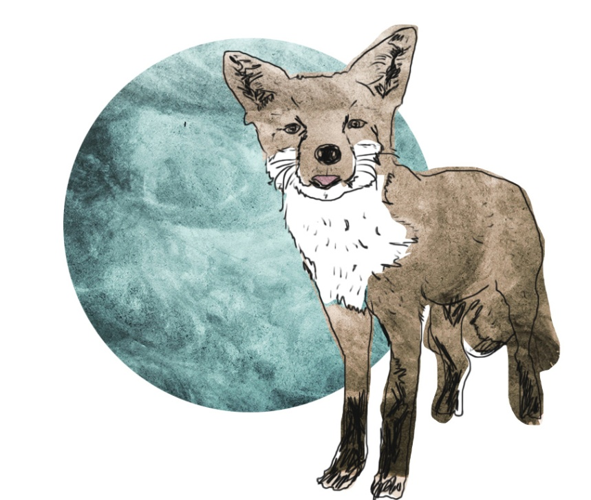 blog images fox