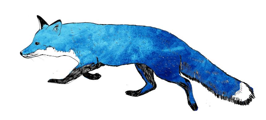 fox blue